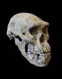 The First Humans Out of Africa: Hominin Dispersal in the Old World